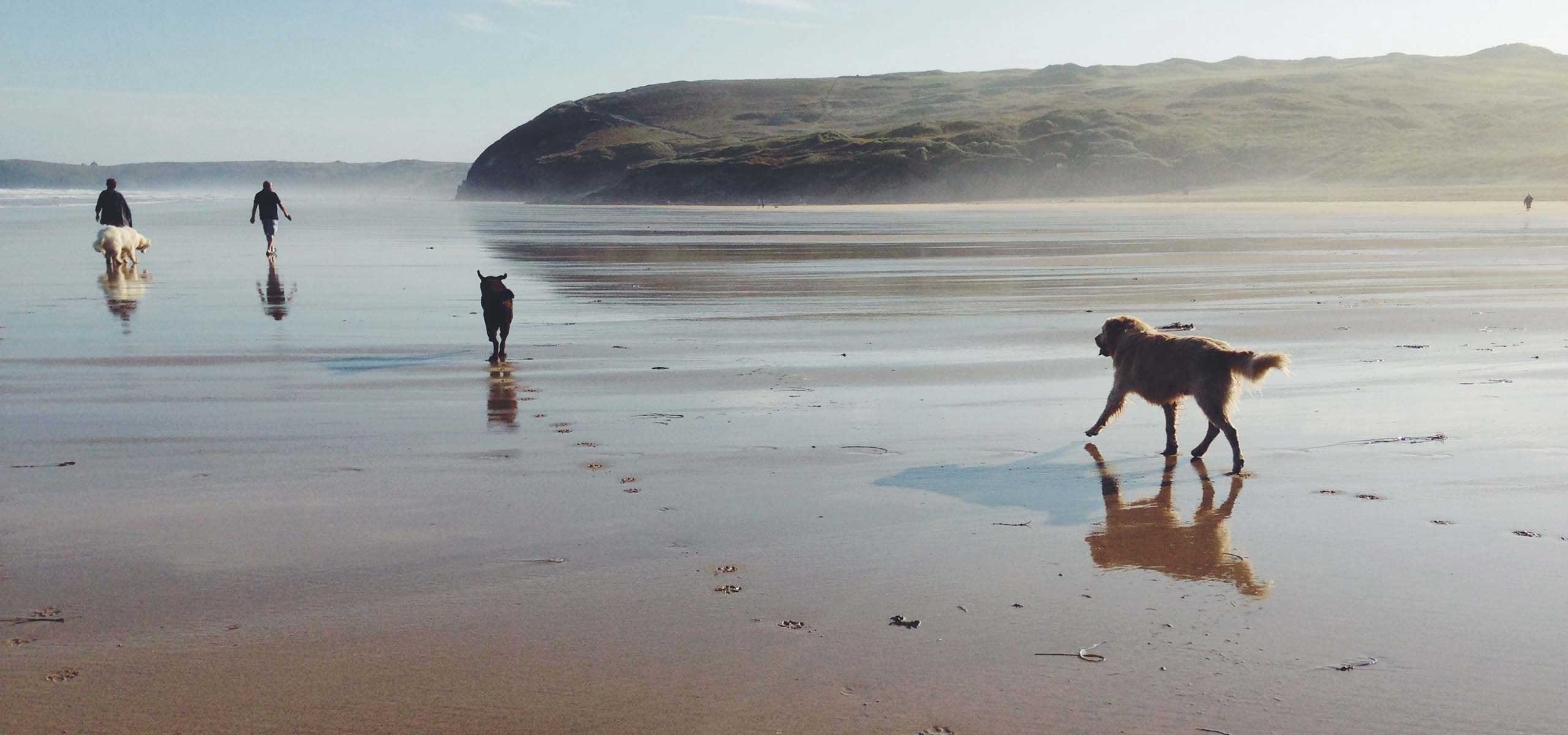 Walking the dogs on the beach Cornwall
